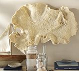 Oversized Fan Coral from Potterybarn.com