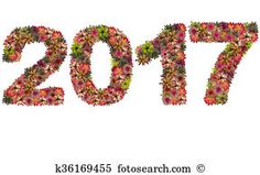 Stock Image of New year 2017 made from bromeliad flowers isolated on white background k36169455 - Search Stock Photos, Mural Pictures, Photographs, and Photo Clipart - k36169455.jpg