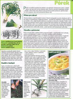 - Pesto, Health Fitness, Herbs, Gardening, Healthy, Food, Meal, Garten, Essen