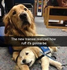 25+ Funny And Cute Dog Snapchats That Will Make Your Day (New Pics)