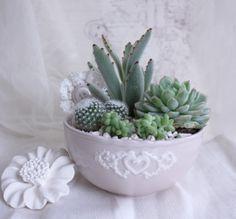 Oltre 1000 immagini su creative plants su pinterest for Catalogo piante e fiori