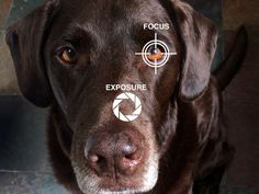 How to Make Taking Great Dog Photos a Snap - Advice from Cesar Milan's Blog.