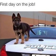 Gotta love K-9 Cops!