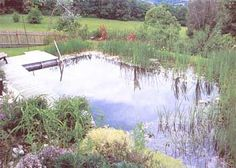 How to Build a Natural Swimming Pool - DIY - MOTHER EARTH NEWS. Cheaper than a pool, and looks like a natural pond! Really want to try this - Swimpond Swimming Pool Pond, Natural Swimming Ponds, Natural Pond, Swimming Holes, Swimming Tips, Living Pool, Mother Earth News, Beautiful Pools, The Ranch