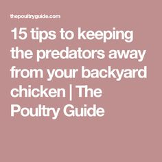 15 tips to keeping the predators away from your backyard chicken | The Poultry Guide