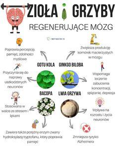 4 potężne zioła regenerujące mózg – wskazówki dla osób z alzheimerem i parkinsonem – Motywator Dietetyczny Smoothie Diet, Natural Medicine, Hand Lettering, Diet Recipes, Herbs, Healthy, Food, Young Living, Diabetes