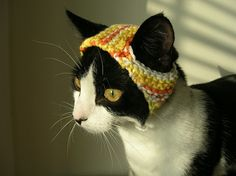 borderline cruel, but...cats in hats are funny. - Click image to find more DIY & Crafts Pinterest pins