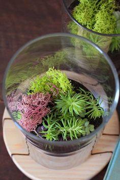 19 DIY Sand Art Terrarium Ideas Projects Everyone Will Love 003 Succulent Arrangements, Planting Succulents, Succulent Plants, Art Of Problem Solving, Diy Originales, Diy Organisation, Art Van, Terrarium Diy, Sand Art