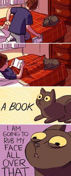 Cat logic - Cats And Books