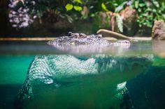Dory, Crocodile, Explore, Outdoor Decor, Photography, Crocodiles, Photograph, Fotografie, Photoshoot
