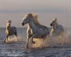 Sea Horse Zwillinge Fine Art Pferd Foto Pferd von WildHoofbeats