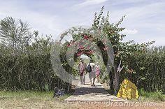 Entrance to the Safari camp in Kenya .Africa.