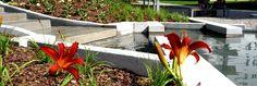 Projekt zieleni osiedlowej – Komandorskie Wzgórze Landscape Design, How To Plan, Studio, Plants, Projects, Landscape Designs, Planters, Study, Plant