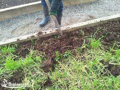 Как удобрить земельный участок без химии?    Есть простой,очень эффективный народный способ! Делайте так!    Сразу, после уборки ранних овощей, засейте участок рожью!!! Сразу, после первых заморозков, всю зелень необходимо выкосить. Скошенные растения ржи, можно использовать для компоста . Корни растений остаются в земле и очень благотворно влияют на почву.    Ранней весной, зеленая масса ржи, снова отрастет и вот тогда, необходимо перекопать весь участок. Растения ржи, при перекопке, нужно…