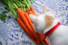 Ethel v. Carrots