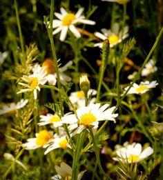Wiosna, ach to ty! Plants, Fotografia, Plant, Planets