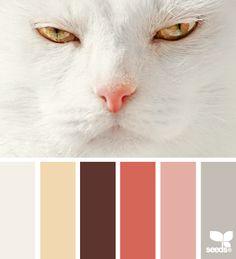 color stare...meow!