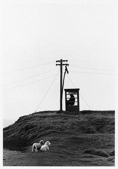 Telephone box, Te Maika, 1975, by Marti Friedlander
