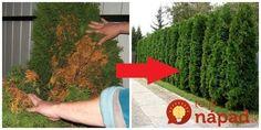 Perfektná pomoc, ak máte na záhrade problém s tujkami. Mne toto neskutočne pomohlo.