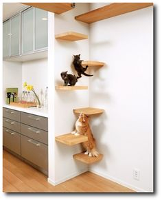 Unique Play Cat Areas - We were going to do this. Love how clean it looks