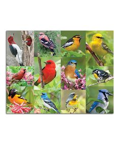 Love this Birds of a Feather 500-Piece Puzzle by Springbok Puzzles on #zulily! #zulilyfinds