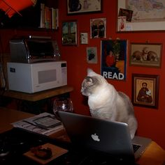 """Susie's little lion Fleur downloaded another e-book from NYPL. """"READ"""" indeed! #NYPLLittleLion"""