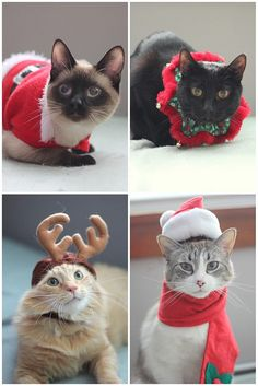 Nothing relieves stress quite like searching for christmas things I'm going to force my poor kitty to wear!