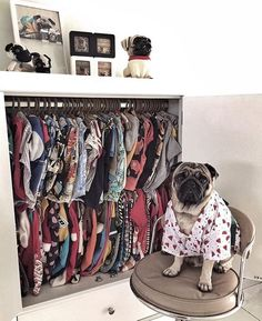 When your pug has better fashion sense than you. Photo by @dellaliem Want to be featured on our Instagram? Tag your photos with #thepugdiary for your chance to be featured.