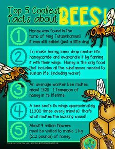 Green Grubs Garden Club: Top 5 coolest facts about. Carl Sagan, Honey Bee Facts, Facts About Honey Bees, Bee Friendly, Bee Art, Bee Theme, Bugs And Insects, Garden Club, Bee Happy
