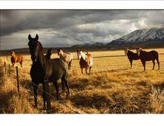 Love huge horse art