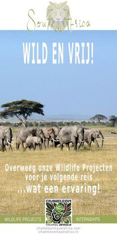 Teen Volunteer, Volunteer Services, Gap Year, Wild And Free, Africa Travel, Mind Blown, South Africa, Wildlife, Website Ideas
