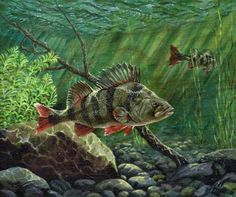 paintings of PERCH - Google Search