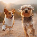 Dog Training Techniques step-by-step dog training guide will get you started. Dog Obedience Training Dog Training Commands Dogs Training Tips Amstaff Puppy, Golden Retriever, Two Dogs, Dogs 101, White Dogs, Black Dogs, Pet Shop, Dog Owners, Pets