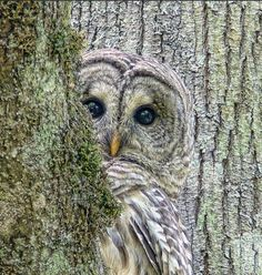 Peeking!