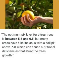 Citrus Trees - Soil pH Levels