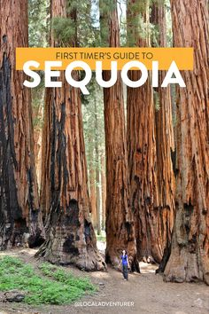 Check out our list of 15 Amazing Things to Do in Sequoia National Park and Kings Canyon National Park. They are home to the 3 largest trees in the world. Arcadia National Park, Crater Lake National Park, National Parks Map, Capitol Reef National Park, National Park Posters, Canyonlands National Park, California National Parks, Smoky Mountain National Park, California Travel