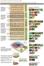 Garden layout based on how vegetables grow