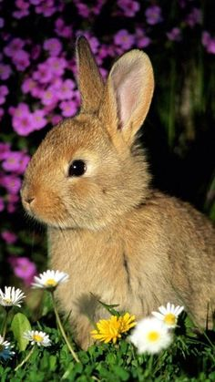 .We have a little bunny who has lived in our yard for several years now and it looks just like this one, same color and size.