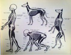 #Datoanimal Los #perros poseen un promedio de 319 huesos y los humanos 206 #VetsMexico