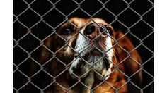 A local animal shelter issued a warning to the community on Friday. The Cambria County Humane Society is reporting that three stray dogs brought to its shelter have tested positive for a highly contagious virus.