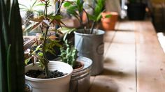 Let it grow: 7 ways to liven up your space with houseplants