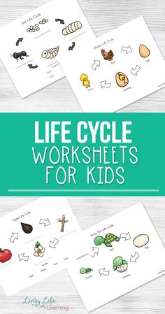 Use these life cycle worksheets for kids to explore insect, plant and animal life cycles with your kids and have fun doing it too! Science Worksheets, Science Activities For Kids, Kindergarten Worksheets, Worksheets For Kids, Kids Printable Activities, Sequencing Activities, Printables, Science Ideas, Preschool Art