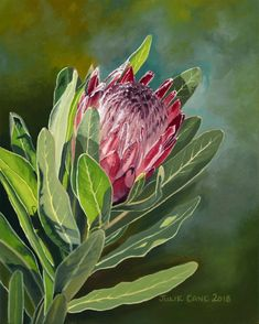 Pink Ice Protea 1 by Julie Cane. Paintings for Sale. Protea Art, Buy Art Online, Australian Artists, Love Painting, Art Auction, Beautiful Artwork, Paintings For Sale, Online Art Gallery, Mixed Media Art
