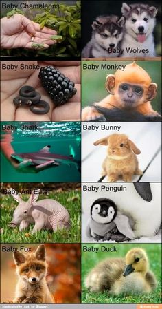 Oooo baby animals. *goes left to right through the pics*   Meh, Aww, eeee, aww ,ehhh neh, aww, AaHHHAAH WHAT IS THAT KILL KILL WITH ZE FIRE BURN BURNNIT!, aww, aww!