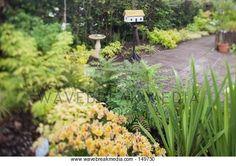 Lush green garden Image by Wavebreak Media