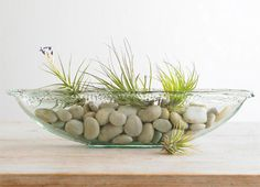 """recently saw these little """"air plants"""" in stone sculptures at a street fair in Tempe... love them, going to try to find some for home!"""