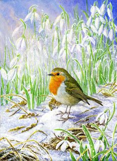 Diamond Dawn ~ Robin & Snowdrops.    The Art of Dick Twinney - Cornish Wildlife Artist
