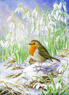 Diamond Dawn ~ Robin & Snowdrops.    The Art of Dick Twinney - Cornish Wildlife Artist