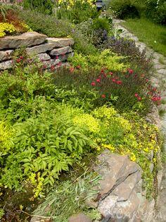 Клумба из различных многолетних цветов на склоне