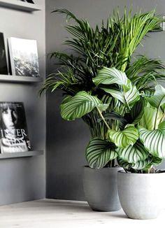 Living Room Plants, House Plants Decor, Plant Decor, Jardin Decor, Decoration Plante, Calathea, Bathroom Plants, Outdoor Plants, Plants Indoor